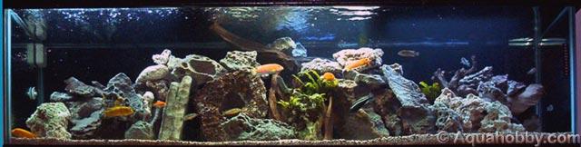 Viveros para marisco expositores de pescado acuarios a for Acuarios a medida